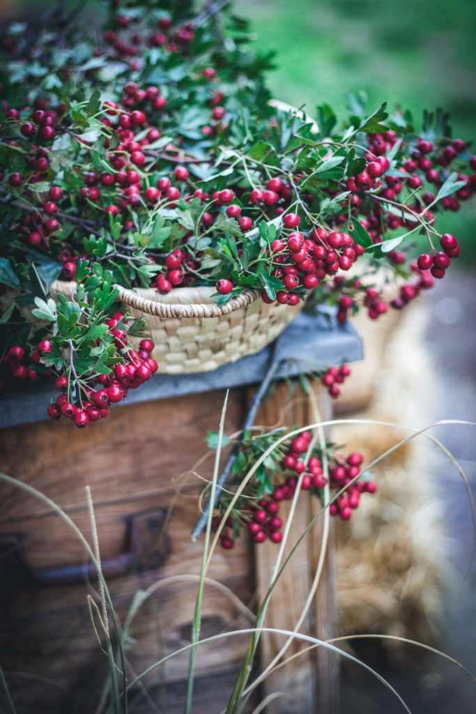 red hawthorn berry harvest in a basket outside on a stand