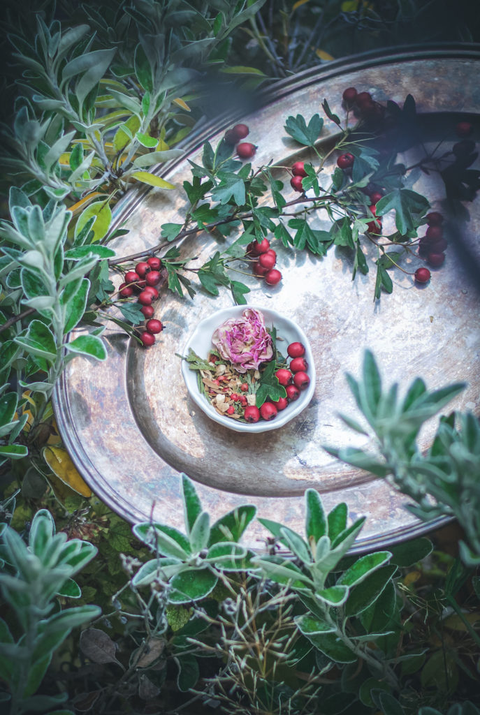 herbal tea blend in dish with rose and red hawthorn berries on a silver platter surrounded by green shrubs