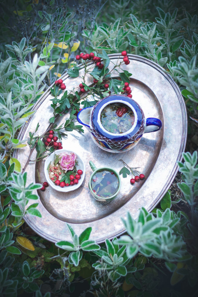 tea pot tea cup and herbal tea blend with rose and red hawthorn berries on a tray surrounded by plants
