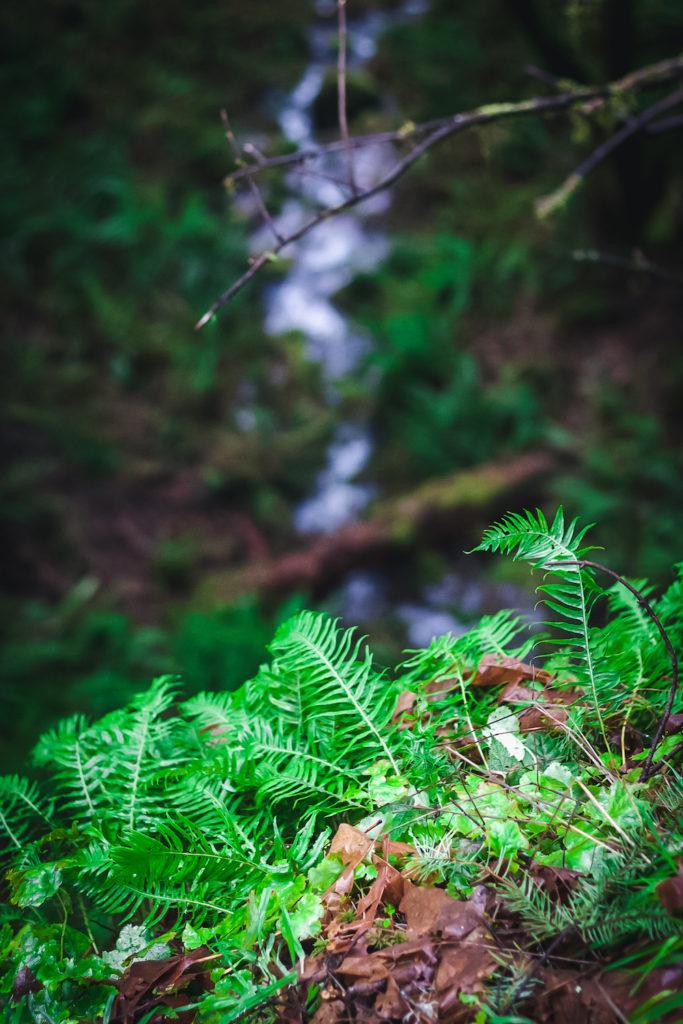 Embodiment for Aquarius Season with nature