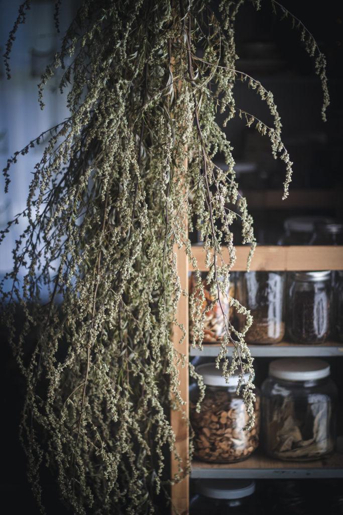 mugwort drying