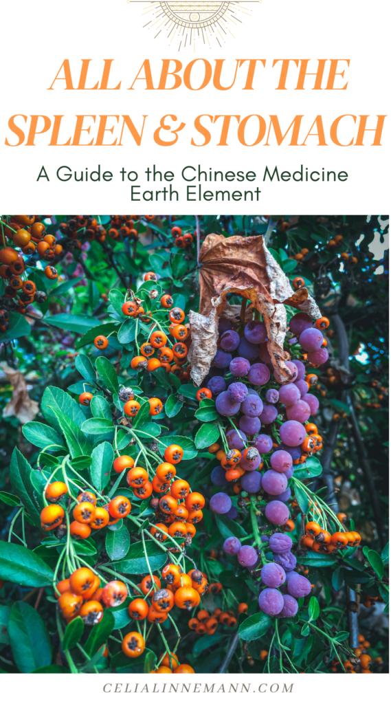 earth element chinese medicine spleen stomach