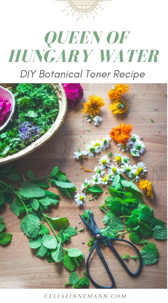Queen of hungary water herbal toner recipe