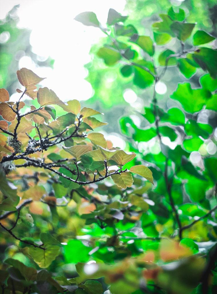 fallish leaves glowing