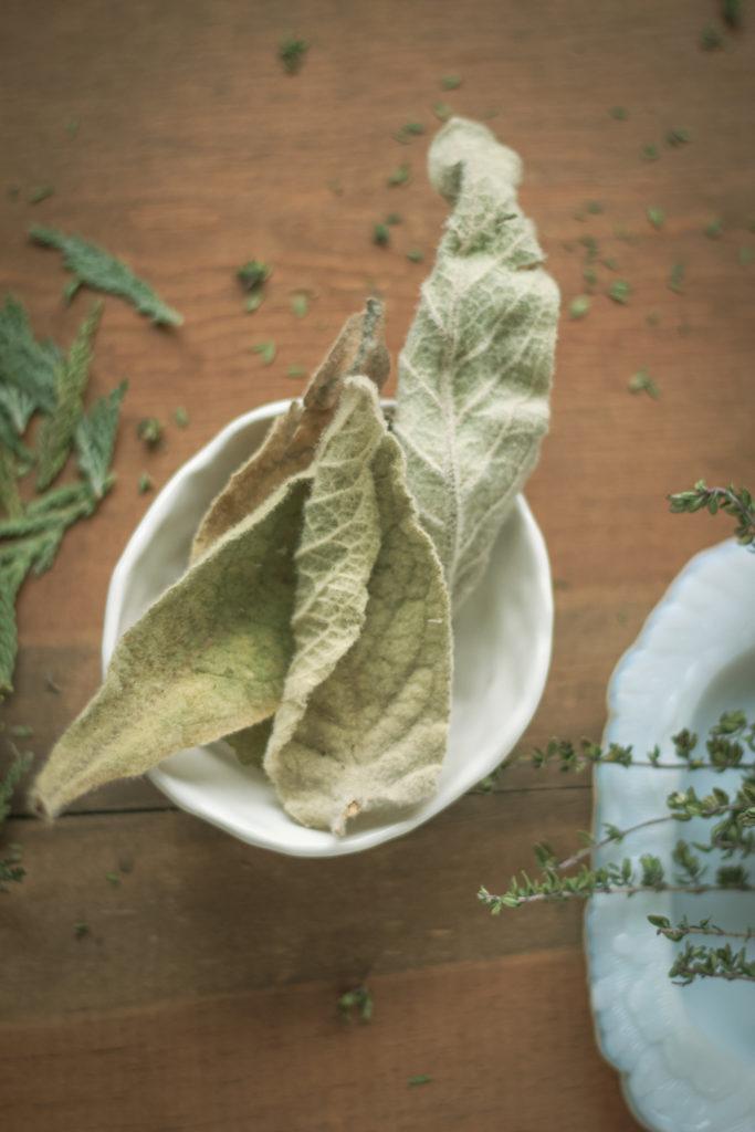 dried mullein