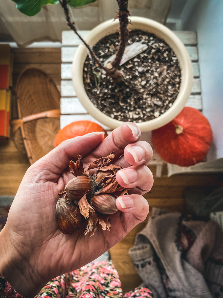 hazelnuts held in white hand next to houseplant and orange pumpkins