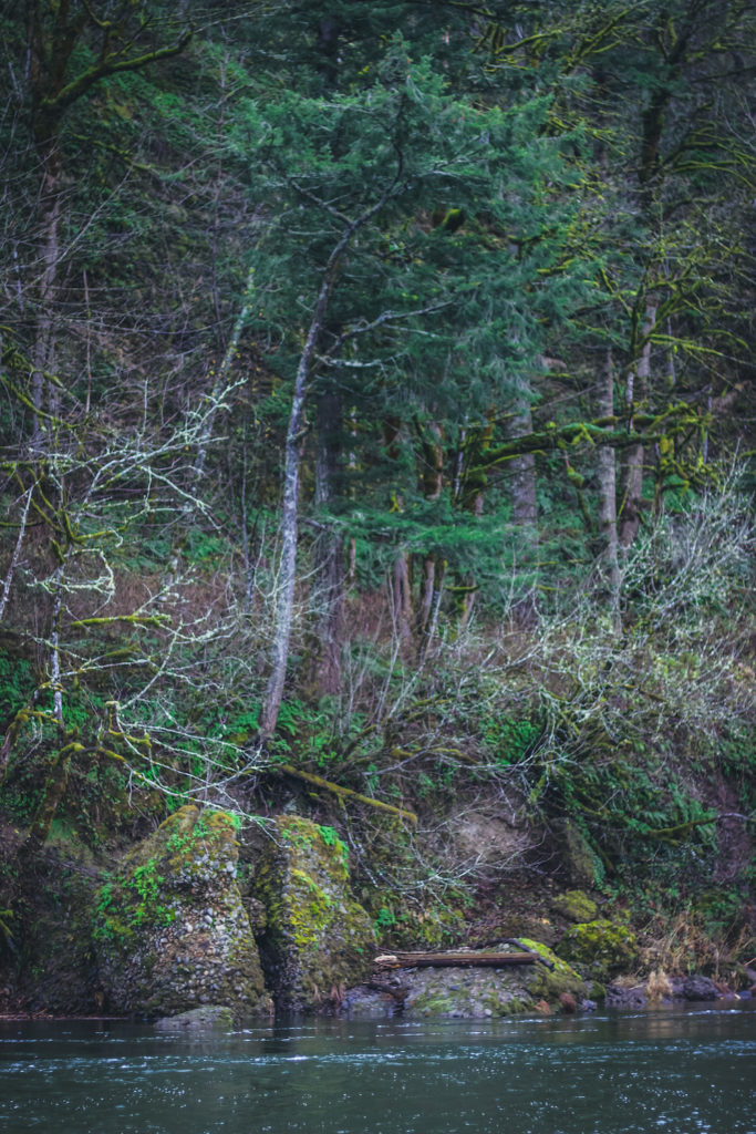 cliff next to river with fall evergreens and moss