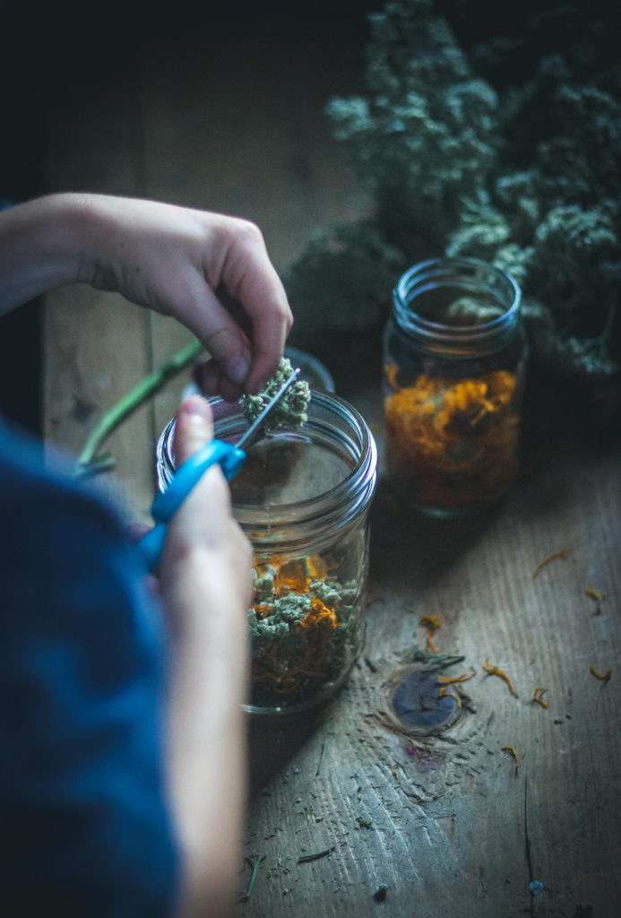 white child hands cutting yarrow for herbal oil