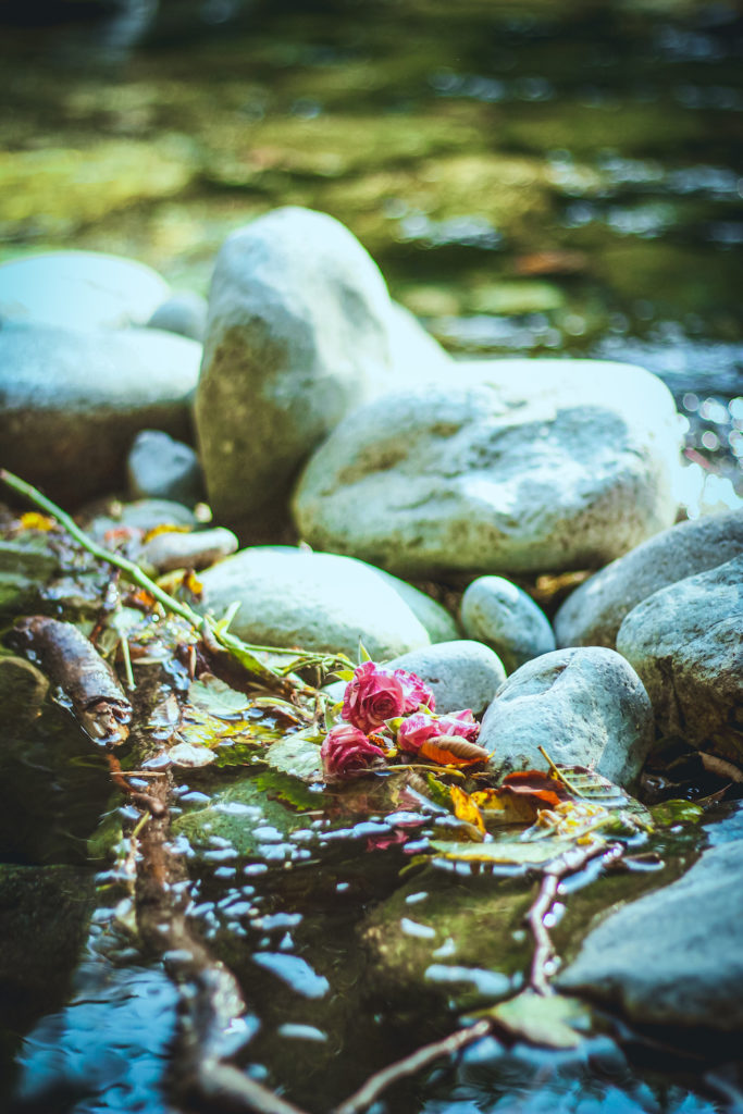 flower in a rocky pool as an offering in a turquoise creek
