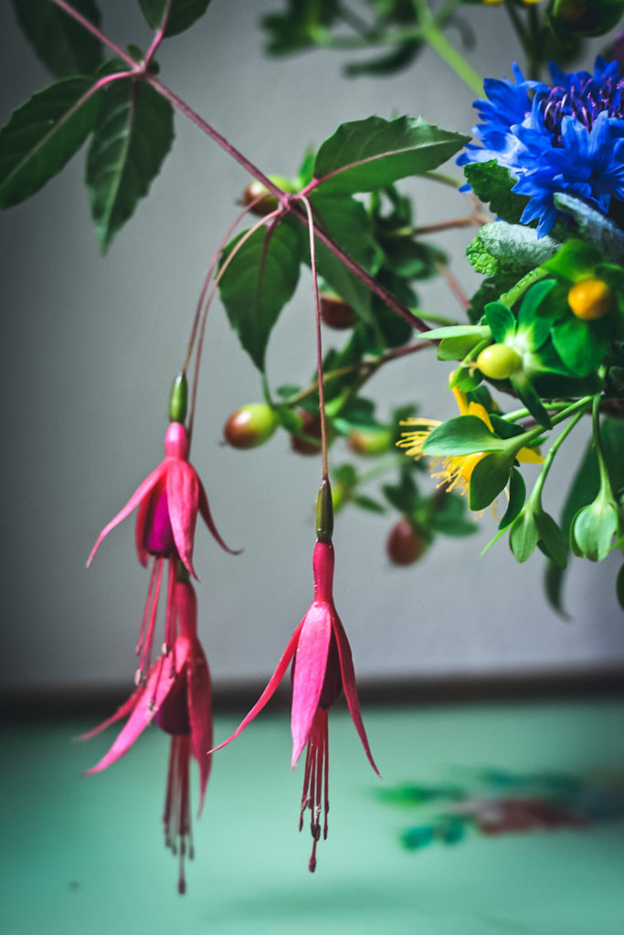 3 fuchsias hanging down