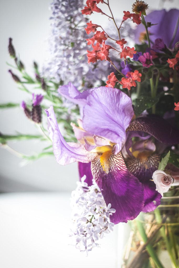 close up purple iris