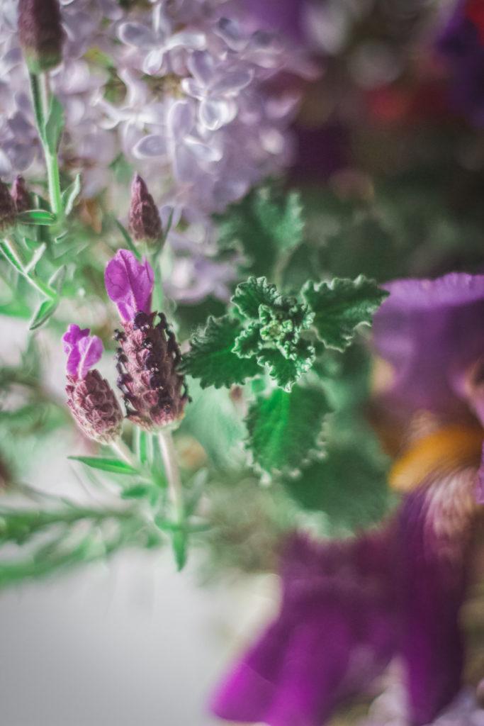 rabbit eared lavender horehound flowers