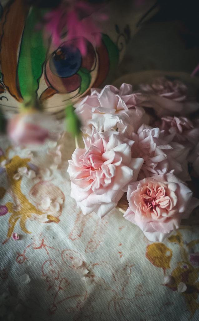 pink cecil brunner rose