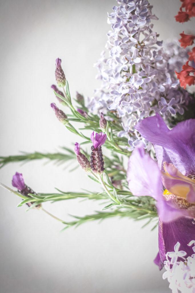 rabbit eared lavender