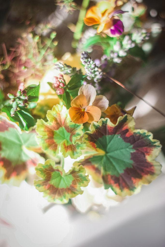 geranium pansy