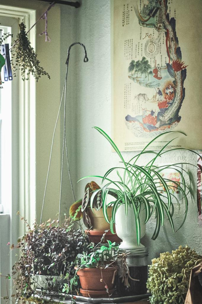 houseplants  on display