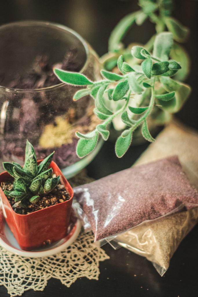 terrarium plants and sand