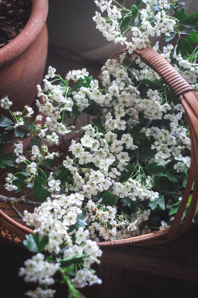 hawthorn flowers in basket